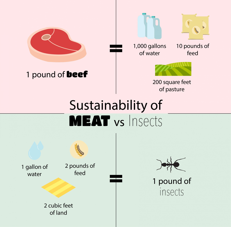 Meat vs Bugs