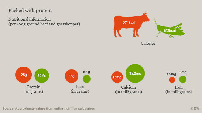 Meat vs insects nutrition facts